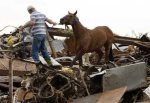 Many horses survived the recent tragedy and are now in safe shelters. Photo credit: NY Daily News