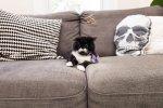 my cat kyle, internet famous cat on instagram