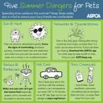 ASPCA Summer Infographic – top 5 summer heat hazards for pets