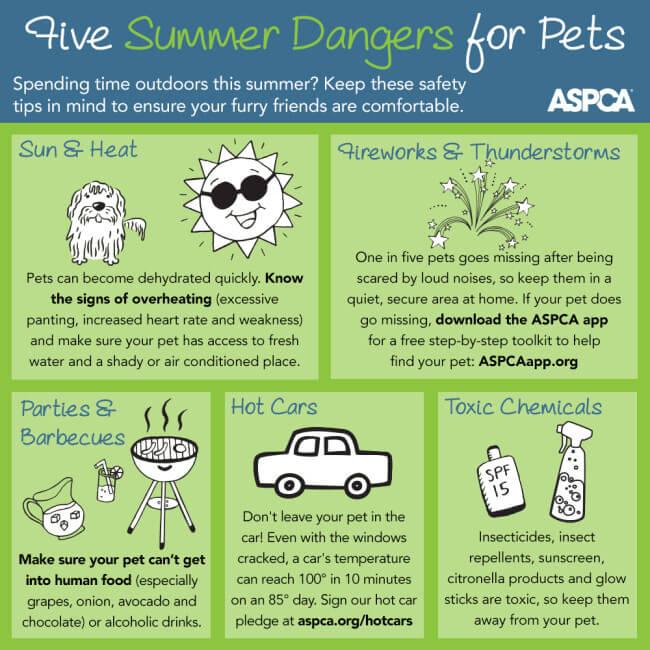ASPCA Summer Infographic - top 5 summer heat hazards for pets