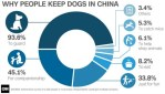 Why people have dogs in China — yulin dog meat festival divides country