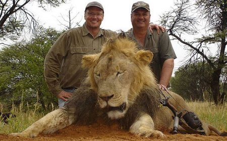 In July, Walter Palmer (left) tracked and killed Cecil the legendary lion in Zimbabwe. Here, he poses beside one of his many trophy hunts. Photo Credit: Telegraph UK