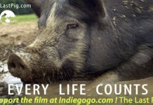 """""""The Last Pig"""" focusses on Comis' personal struggles as a pig farmer. Photo credit: The Last Pig"""