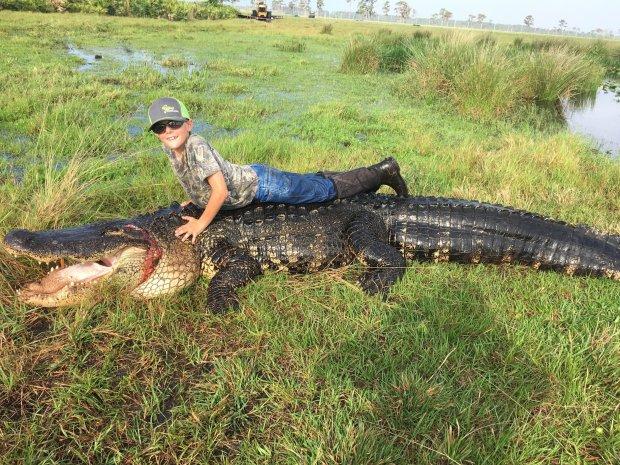 15 foot gator caught in Okeechobee The 800lb creature was fatally shot in Okeechobee, Florida. Photo Credit: metro.co.uk