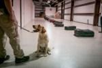 bomb sniffing dog Gghee at San Antonio air force base