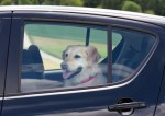 dog in car with windows closed