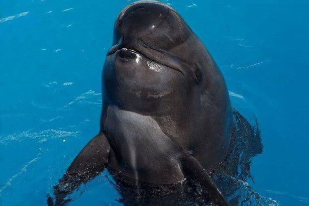 Bubbles (pictured) had been at SeaWorld San Diego in California for almost 30 years. Photo Credit: SeaWorld San Diego via Mirror