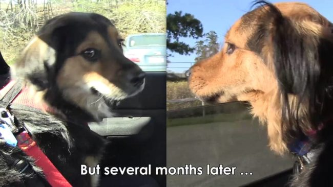 Tails Wag When Doggy Siblings Are Reunited One Year After Their Rescue