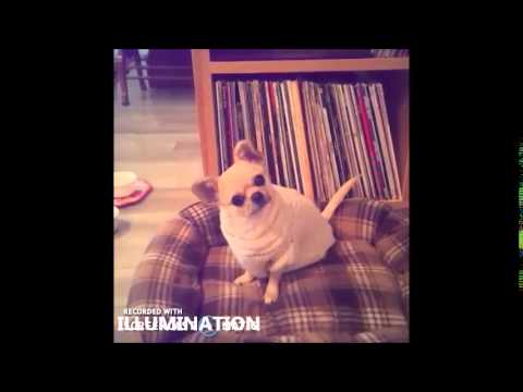 """Chihuahua Has Best Reaction To """"Do You Want To Go For A Walk?"""""""