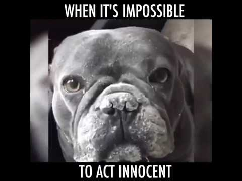 When It's Impossible To Act Innocent…