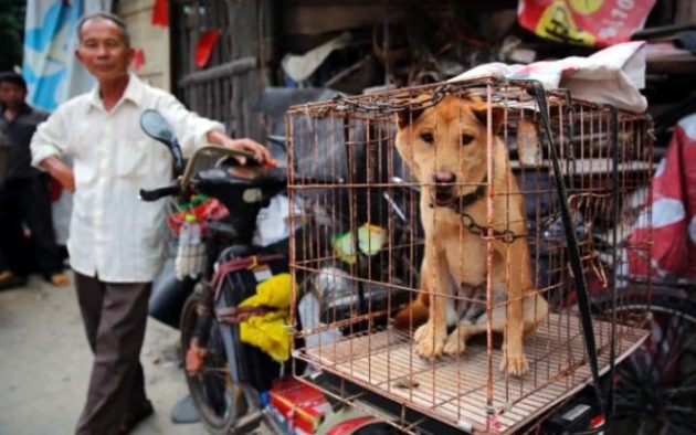 A dog is seen in a cage for sale at a market in Yulin city, southern China's Guangxi province Photo Credit: EPA/Wu Hong