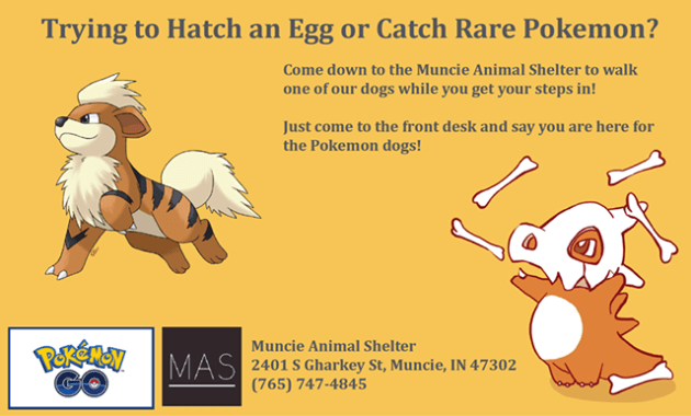 "The Muncie Animal Shelter took to Facebook on Tuesday, writing: ""Come out to the Muncie Animal Shelter between 10am-5:30pm any day and walk an adoptable dog as you hunt for Pokemon and hatch eggs!"" Photo Credit: Muncie Animal Shelter Facebook"
