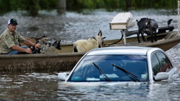 A man navigates a boat of rescued goats in Gonzales, Louisiana. Photo Credit: CNN
