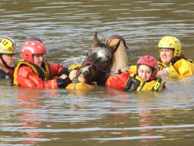 The Louisiana State Animal Response Team (LSART) rescues a horse from the floodwaters. Photo Credit: LSART via Facebook
