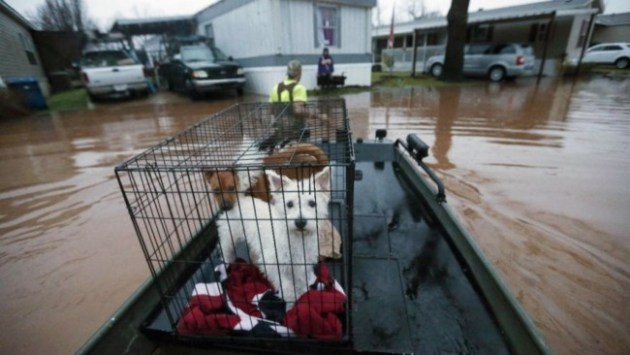 Sam Breen tows his skiff as he helps a friend retrieve his dogs Edison, foreground, and Allie, from his home in Bossier City, Louisiana. Photo Credit: AP Photo/Gerald Herbert