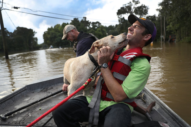 Mark Buchert from the Louisiana State Animal Response Team gets a lick from a dog he helped rescue from flood waters on August 15. Photo Credit: Joe Raedle/Getty Images via Huffington Post