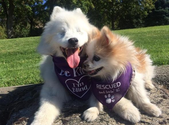 New Dog Best Friend Helps Blind Dog