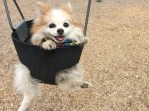 The fluffy duo Zen the dog in swing