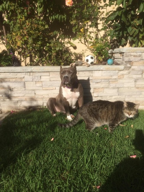 Lulu and Omar (age 19 and still calling the shots), hanging out in the garden.