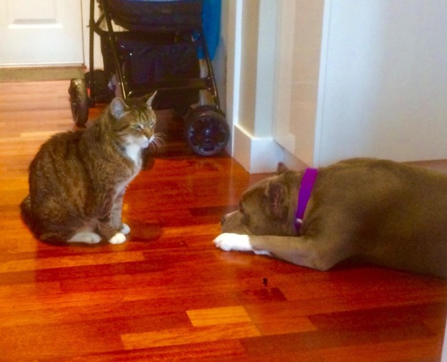 Lulu knows who's boss in the family because Omar, the 19 year-old cat, has Jedi mind control abilities.