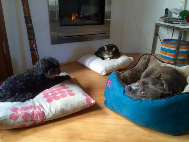The holidays around the fire. Of course the old cat gets the primo spot! But none of us is spoiled!!