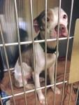 homeless-dog-at-companion-animal-alliance-of-baton-rouge-louisiana-shelter