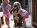 little-girls-hugging-pit-bull-dog