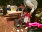 pit-bulls-are-good-with-kids-pitbull-lulu-with-little-girl