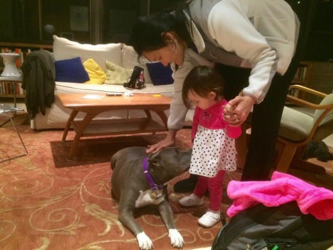 """Pitbulls are extremely stable dogs, and were known as """"Nanny Dogs"""" in England because they are so good with children. They, like any dog, have to be severely abused to become unstable."""