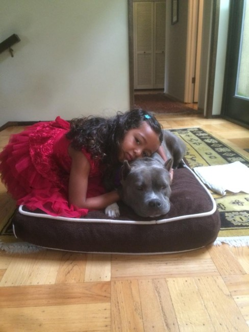 Lulu Loves To Be Loved, especially by kids. She was deprived and literally taken as evidence of inhumanity from the puppy mill where she was enslaved. She is a pure-bred American Staffordshire Terrier.