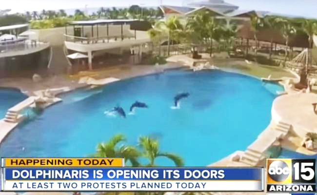 new-tourist-attraction-dolphinaris-arizona-marine-park-with-captive-dolphins-opening-its-doors