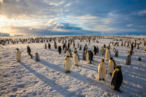 Emperor penguins are among the wildlife in Antarctica's Ross Sea, which is now protected. Photo Credit: Paul Nicklen, National Geographic Creative