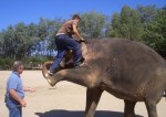 tai-the-elephant-trained-with-bullhook-at-californias-six-flags-discovery-kingdom