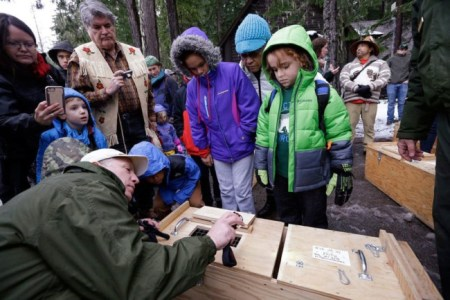 Visitors peer into a box holding a Pacific fisher Friday, Dec. 2 before the animal was released into a forest at Mount Rainier National Park. Pacific fishers, forest-dwelling weasel-like mammals whose numbers have declined in the West Coast throughout the decades, are slowly making a comeback in Washington state. The fisher was among 10 captured days earlier in British Columbia, and then released Friday as part of a multi-year effort to restore them to their historic range. Photo Credit: AP Photo/Elaine Thompson
