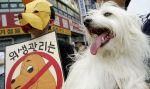 south korea dog meat market is shutting down