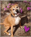 Dog Rosie rescued by Almost Home Animal Rescue and Adoption