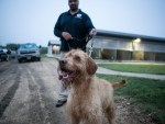 Bobby wirehaired vizsla dog at the Canine Training Center on Lackland Air Force Base