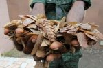 Ivorian wildlife agent is pictured with pangolin scales which they confiscated from traffickers in Abidjan, Ivory Coast,