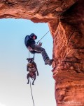 Penni the pit bull dog rappeling, rock climing with dad
