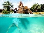 tourists swim with elephants at Myrtle Beach Safari, Myrtle Beach, South Carolina
