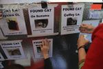 volunteers post flyers of found cats in Santa Rosa after going missing during California wildfires