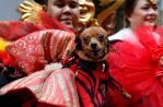 A man displays his dog wearing Chinese cheongsam costume ahead of celebrations of the Year of the Dog in the Chinese Lunar calendar in Manila