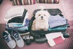 white dog sitting in suitcase