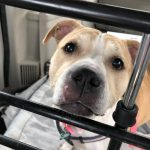Pinky the dog quietly released by animal control officials on April 16
