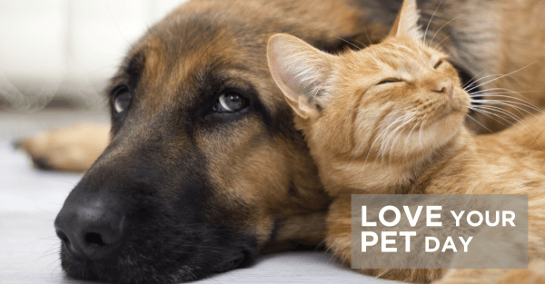 Love Your Pet Day: Furry Friends Steal The Show