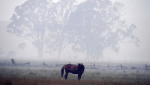 horse in dense smoke from Australian bushfires
