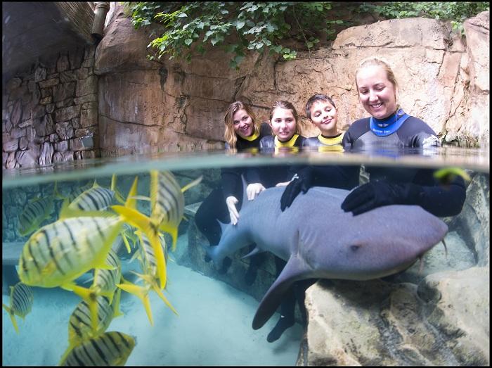 Shark Swim -Discovery Cove Orlando