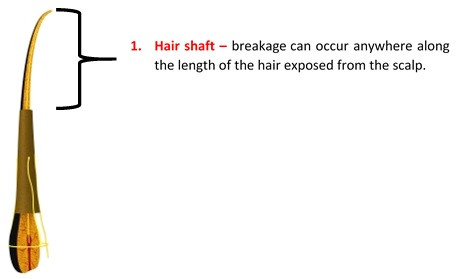 Is Your Hair Breaking or Shedding?