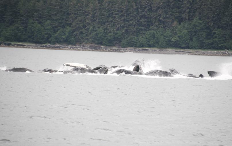 A big group feeding