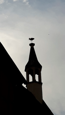 A stork on the church steeple